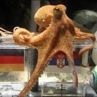 ЧМ-2014: осьминог Пауль и животные-прогнозисты